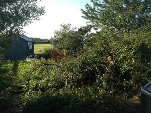Preparing a Wild Garden for Hedge Trimming