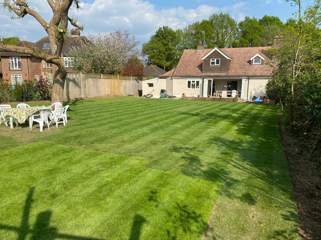 Gardener laid turf but still patchy