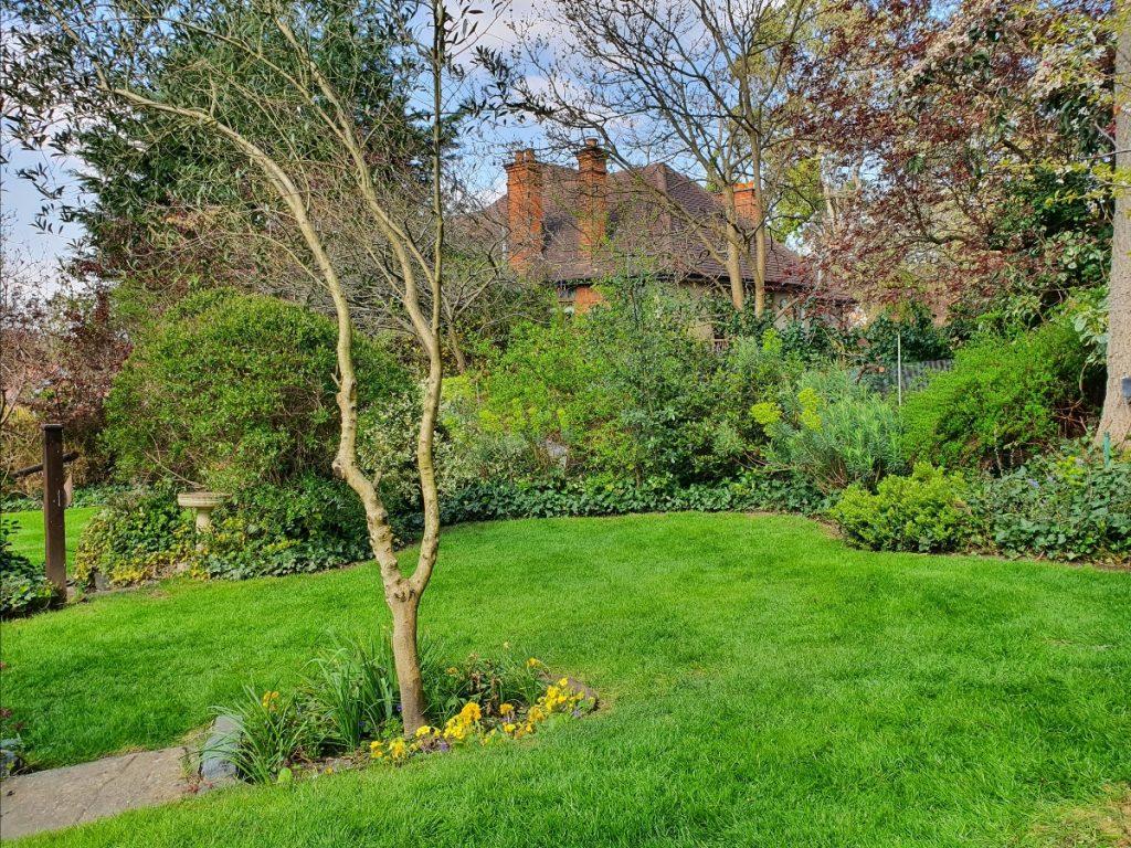 Kevin's green garden